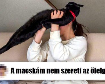 20+ szemtelen macska, aki tudja, ki a főnök a házban (és ez nem az ember)
