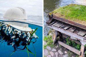 18 kép, amelyek bizonyítják, hogy a természet, mindig megtalálja a módját annak, hogy visszaszerezze, ami az övé