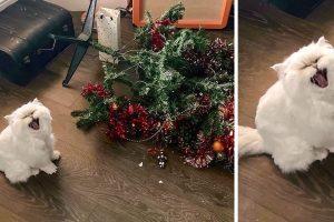 15+ fotó, amely bizonyítja, hogy a macskák valóban egy másik bolygóról származnak