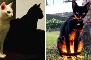 16 kép, amely bizonyítja, hogy az élet nem ugyanolyan, ha van a házban egy fekete macska