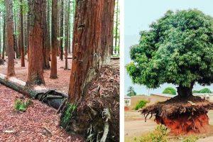 18 fa, amelynek élni akarása olyan erős, hogy bármit túlélhet
