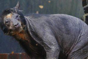 7 állat, mely felismerhetetlennek tűnik a szőre nélkül