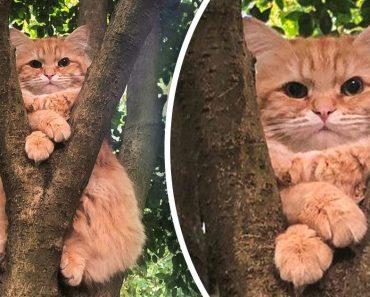 15 fotó macskákról, amelyek bebizonyítják, hogy soha nem tudjuk őket igazán megérteni