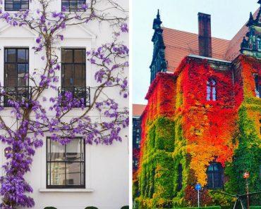 14 alkalom, amikor a növények mesejelenetekké változtatták a házakat