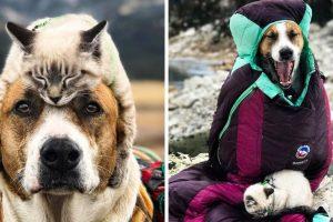 Egy utazó pár örökbe fogadott egy kutyát és egy macskát, és most együtt utaznak