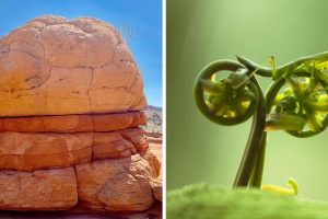 20 fénykép, amely bizonyítja, hogy a természet mindig mutatni akar nekünk valamit
