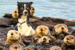 16 vidám állat, amely nem tudja eldönteni, hogy melyik fajhoz tartozik