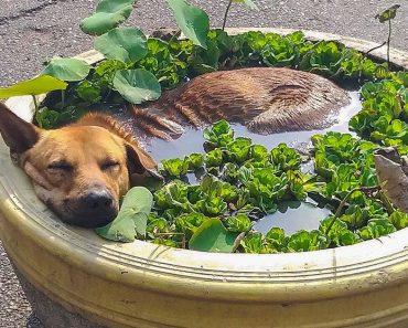 15+ szuper laza állat, aki elérte a végső relaxációs szintet