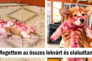 20 állat, akik arcátlanul követték el rendetlen bűneiket, és úgy néznek ki, mintha nem is bánnák őket