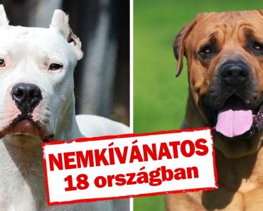 8 kutya, amelyeket különböző országokban betiltottak