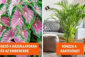7 szobanövény, amelyeket veszélyes lehet otthon tartani