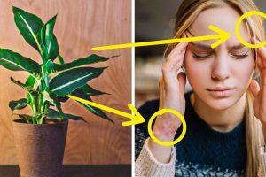 10 szobanövény, amely lassan mérgezi az egészségedet