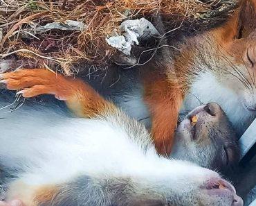 15 kép, amelyek megmutatják, hogy az állatok pontosan ugyanúgy tudnak viselkedni, mint az emberek