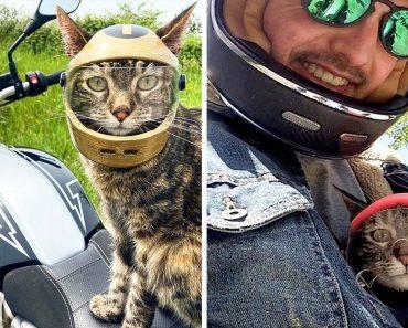 Egy macska imád motorozni, ezért a gazdája készített neki egy sisakot, és most igazi motoros lett belőle