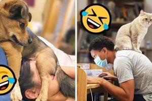 19 állat, akik szerint minden hely tökéletes egy kis pihenésre