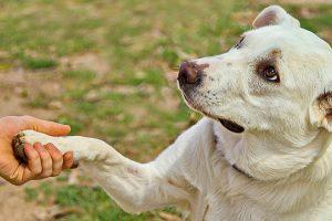 6 jelzés, amit a kutyád küld, amikor rád teszi a mancsát