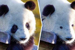 Hogyan nézne ki 20 állat a legjellegzetesebb tulajdonságai nélkül?