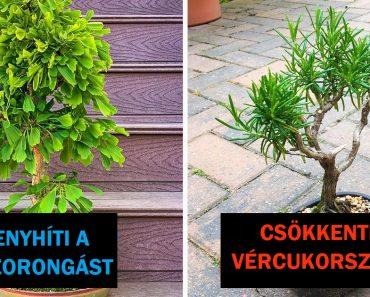7 növény egészségügyi előnyökkel, amelyek beltérben termeszthetők